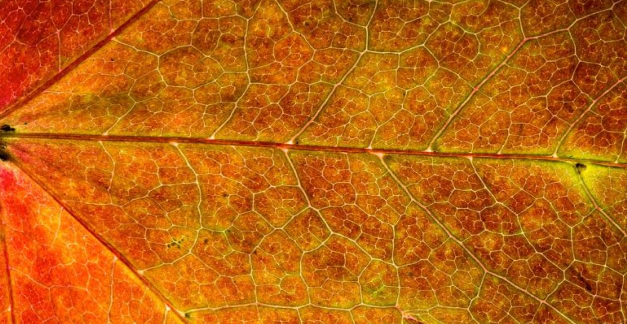 02 Leaf